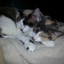 Sistely love by Christina McGeorge - Animals - Cats Portraits