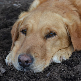 Mulch bath on a hot day by Isabelle Largen - Animals - Dogs Portraits