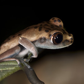 by Brian Lee - Animals Amphibians