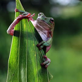 :: @ leaf :: by Dedy Haryanto - Animals Amphibians