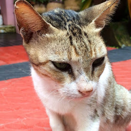 by Ken Biju Jacob - Animals - Cats Kittens ( #iphone 5s )