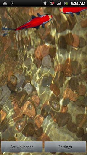 玩個人化App|紅色的錦鯉在硬幣免費|APP試玩