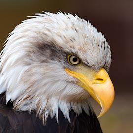 by Jiri Reisser - Animals Birds