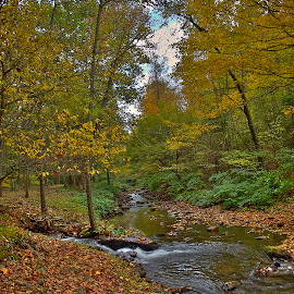 Old Mill Run-Off Creek by Sandy Friedkin - Landscapes Forests ( water, colors, creek, fall, trees, flow, landscape,  )