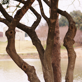 by K Dawn McDonald - Nature Up Close Trees & Bushes