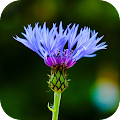 App Blur Image - DSLR focus effect APK for Windows Phone