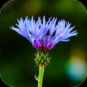 App Blur Image - DSLR focus effect APK for Windows Phone