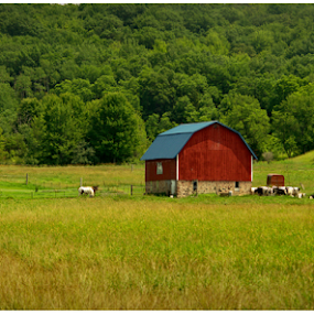 An American Beauty by Michael Priest - Novices Only Landscapes ( farm, wisconsin, finacial, vally, barn, freedom, dream, american, leisure, security, landscape, livestoick )
