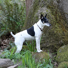 Sassy Superdog by Bill Waterman - Animals - Dogs Portraits ( playing, trees, dog, landscape, animal,  )