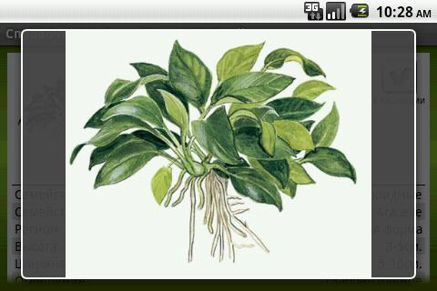水生植物|玩書籍App免費|玩APPs