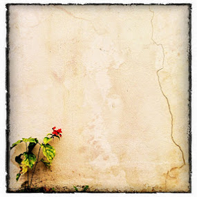 Lonesome by Gareth  Evans - Nature Up Close Flowers - 2011-2013 ( flower wall red garden )