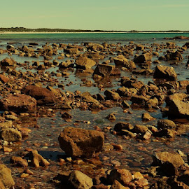 Gathering by Leigh Martin - Nature Up Close Rock & Stone ( rocks ocean view low tide )