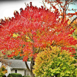 by Yvonne Collins - Nature Up Close Trees & Bushes ( fall, color, colorful, nature )