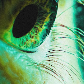 Iris by Craig Wactor - People Body Parts ( android, seeing, eyelashes, vision, anxiety, glance, stare, intense, close up, looking, sight, macro, visual, see, pupil, future, gaze, iris, green eyes, eye, fear )