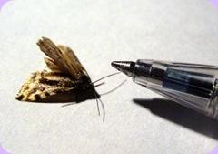 154265_moth_meets_pen