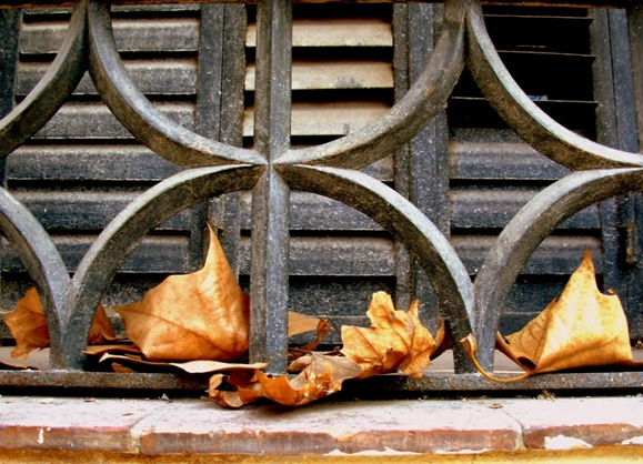 hojas y persiana