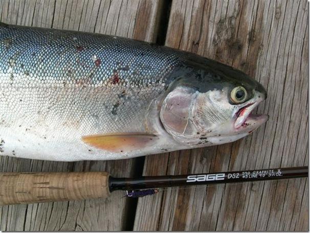 trout&rod