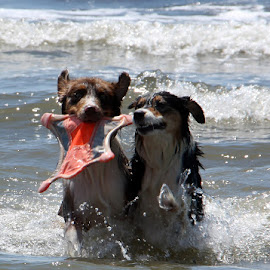 Creatures from the sea by Kristi Muck - Animals - Dogs Playing