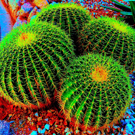 NEON CACTUS by Doug Hilson - Digital Art Things ( neon, intense color, digitally enhanced, digtal art, cactus )