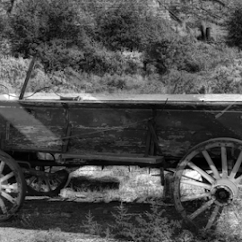 Transportation by Gloria Gilbert - Transportation Other ( old, ancient, nature, wagon, transportation )