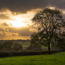 Autumnal sunset by Stephen Tolley - Landscapes Sunsets & Sunrises ( stormy, clouds, fams, warm, autumnal, cornish, landscape, sunlight, cornwall, sun, farming, field, hedge, ash, sky, tree, autumn, sunset, fields )