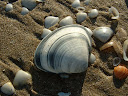 Fotos Gratis Mar -conchas