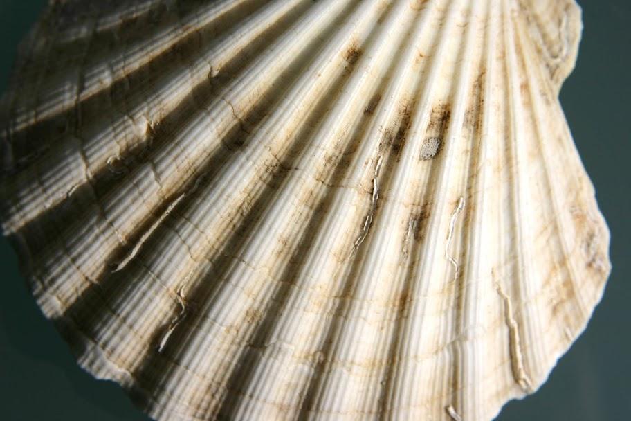 Fotos Gratis Agua - Mar - Concha