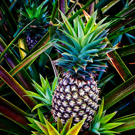Pineapple: looks good and tastes good by Erico Claudio - Food & Drink Fruits & Vegetables ( fruit, still life, ornamental plant, pineapple, philippines, nikon d90 )