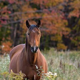 Autumn horse by Judy Smithcronk - Novices Only Pets ( color, autumn, pet, fall, horse )