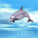 Dolphin Playing Live Wallpaper icon