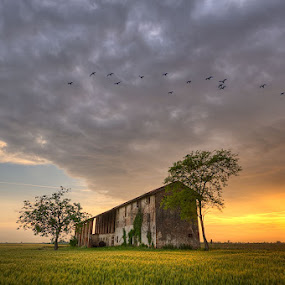 Musile Di Piave - Old House - Wild Ducks by Fa Ve - Landscapes Prairies, Meadows & Fields ( wheat, old house, wild, tree, veneto, duck, musile di piave, italy, sun )