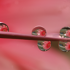 Water Drops Placed by a Syringe...... by Aroon  Kalandy - Abstract Water Drops & Splashes