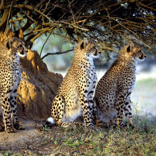 Leopard Jigsaw 解謎 App LOGO-APP試玩