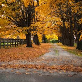 A Fall Laneway by Mark Paterson - City,  Street & Park  Vistas