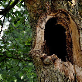 Old Kentucky Tree by Jane Singer - Nature Up Close Trees & Bushes ( big old tree, tree, old tree, hollow tree )