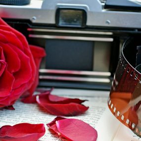 unknown by Bethany Fuller - Artistic Objects Still Life ( film, rose, still life, camera, book )