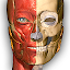 Anatomy Learning - 3D Atlas for Lollipop - Android 5.0