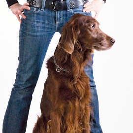 Number 1 in Family. by Marcel Cintalan - Animals - Dogs Portraits ( priceless, setter, dog portrait, family member, animal )