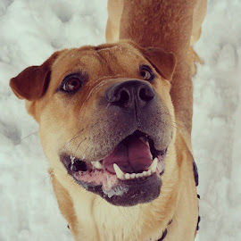 Snow day fun. by Rusty Jhorn - Animals - Dogs Portraits