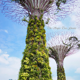 The Super Tree Groove by Ricky Liew - Buildings & Architecture Architectural Detail ( marina bay sands, gardens by the bay, flower dome, singapore )