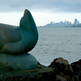 The Sausalito Sea Lion snobs San Francisco by Wade Tregaskis - Buildings & Architecture Statues & Monuments ( statue, sausalito, seal, sea lion, san francisco )