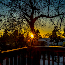 Beautiful Evening In Our Neighborhood by Joseph Law - City,  Street & Park  Neighborhoods ( houses, neighborhoods, winter, old tree, snow, beautiful, sunshine, deck, evening )