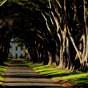 Invite Me In.... by Dennis Ducilla - Buildings & Architecture Other Exteriors ( point reyes, california, driveway, national parks, trees, sunlight, good light )
