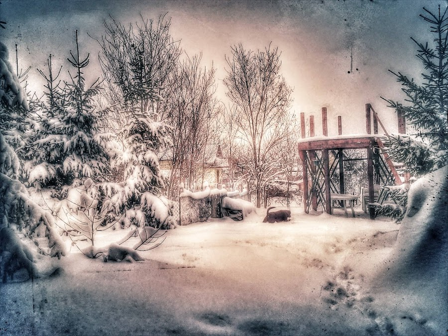 Winter Story in Garden by Nat Bolfan-Stosic - Nature Up Close Trees & Bushes ( story, winter, snow, white, garden )