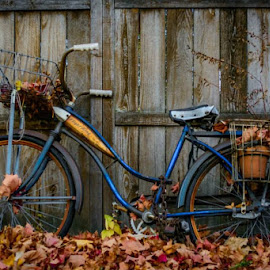 by Danielle Mettling - Transportation Bicycles