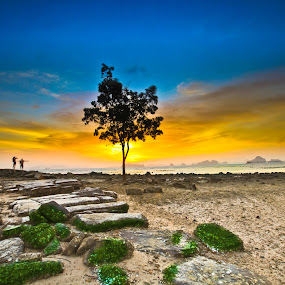 Hoping Tree by Andrial Kusuma - Nature Up Close Trees & Bushes ( tree, sunset, couple, beach )