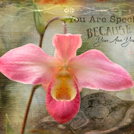 Your are special by Rosemary Jardine - Typography Quotes & Sentences ( pink orchid, orchid, atlanta ga, botanical gardens )