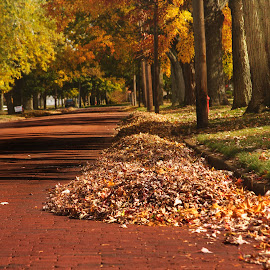On an Autumn Day by Sandra Hilton Wagner - City,  Street & Park  Neighborhoods ( autumn, foliage, neighborhood, trees, road, leaves, red brick,  )