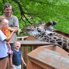 Feeding a Giraffe by Brian Frackelton - People Family ( zoo, giraffe, family, feeding, children )