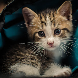 Camera Bag by Nick Kelleher - Animals - Cats Kittens ( flash, aww, camera bag, kitten, dof, cute )